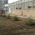 Участники штаба акции #съелиели прокомментировали решение «Пятерочки» о высадке елей